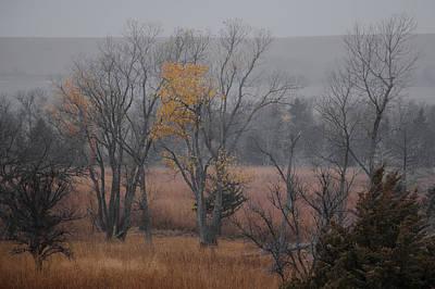 Photograph - Gray And Yellow by Ryan Heffron