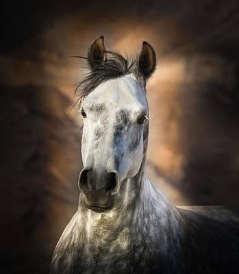Forelock Photograph - Gray Arabian Horse by Linda Sherrill