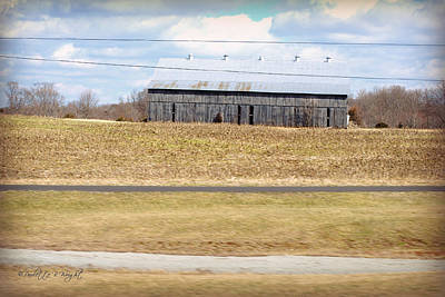 Photograph - Gray Barn In A Cornfield by Paulette B Wright