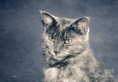 Digital Art - Gray Cat by Jutta Maria Pusl