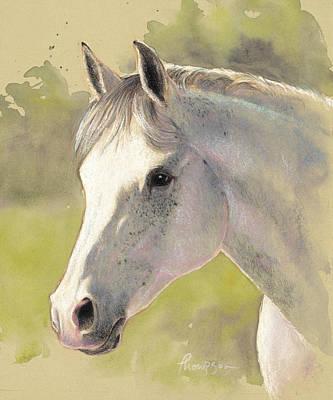 Arabian Horses Mixed Media - Gray Gentleman by Tracie Thompson