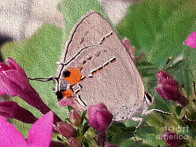 Photograph - Gray Hairstreak Butterfly by Donna Brown