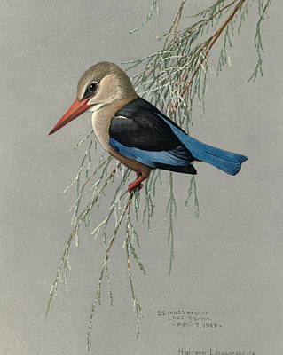 African Wild Birds Painting - Gray Headed Kingfisher by Rob Dreyer
