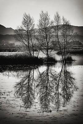 Photograph - Gray Lodge Trees by Robert Woodward