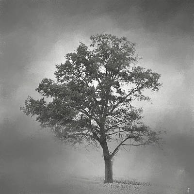 Photograph - Gray Mist Cotton Field Tree - Landscape by Jai Johnson