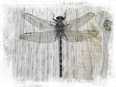 Photograph - Gray Petaltail Dragonfly by Joe Duket