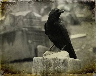 Ravens In Graveyard Photograph - Gray Rainy Day Raven In Graveyard by Gothicrow Images
