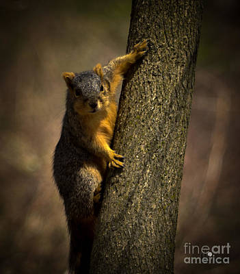 Photograph - Gray Squirrel by Ronald Grogan