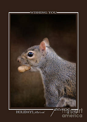 Photograph - Gray Squirrel With Nut Wildlife Christmas Cards by Jai Johnson