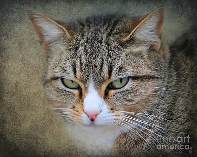 Domestic Short Hair Cat Photograph - Gray Tabby Cat by Jai Johnson