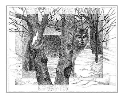Drawing - Gray Wolf by Jack Pumphrey
