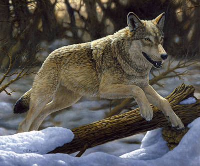 Wolves Painting - Gray Wolf - Just For Fun by Crista Forest