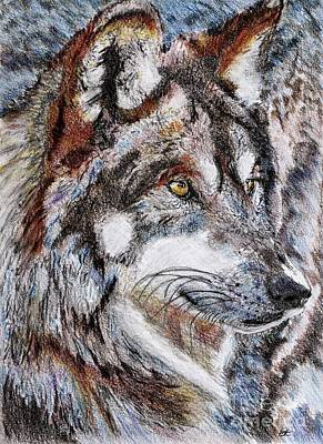 Jem Fine Arts Drawing - Gray Wolf Watches And Waits by J McCombie