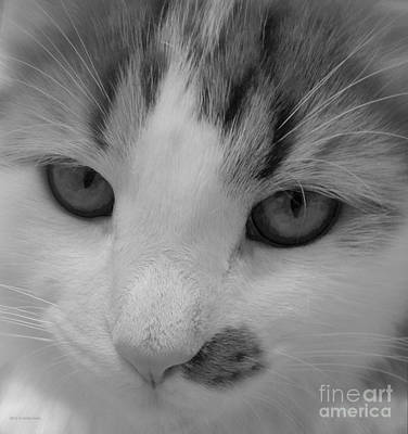 Photograph - Grayscale Kitten by Anita Lewis