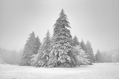 Photograph - Grayson Highlands Spruce Fir by Bernard Chen