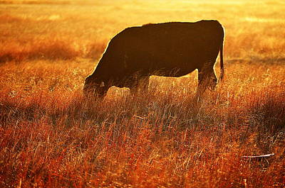 Photograph - Graze by Clarice  Lakota