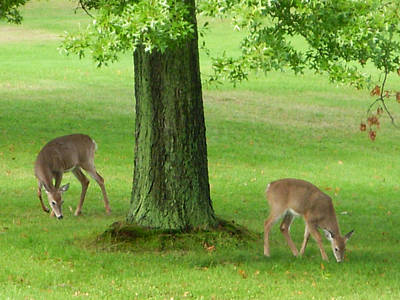 Browns Photograph - Grazing by Aimee L Maher Photography and Art Visit ALMGallerydotcom