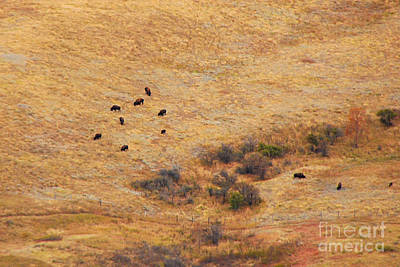 Photograph - Grazing At The Bottom Of Bear Butte by Mary Carol Story
