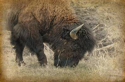 Photograph - Grazing Buffalo by Dyle   Warren