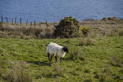 By The Sea Digital Art - Grazing By The Sea by Bill Cannon