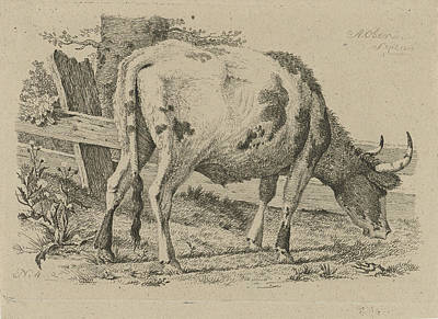 Fence Drawing - Grazing Cow At A Fence, Anthony Oberman by Artokoloro