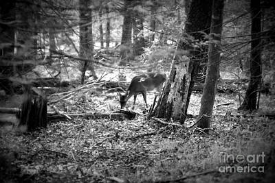 Photograph - Grazing Deer by Cynthia Mask