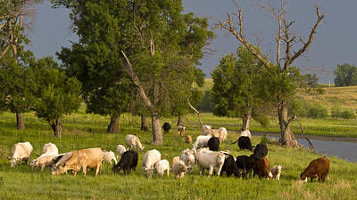 Photograph - Grazing by Don Durfee