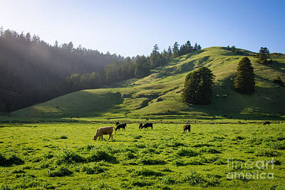 Photograph - Grazing Hillside by CML Brown