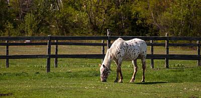 Photograph - Grazing Horse by Bianca Nadeau