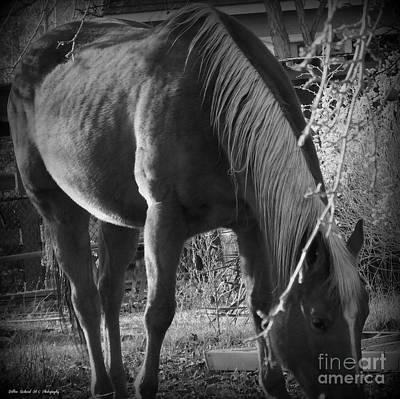 Photograph - Grazing Horse by Bobbee Rickard