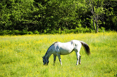 Horse Photograph - Grazing Horse by Donna Doherty