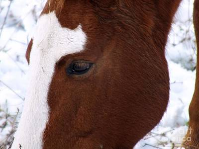 Photograph - Grazing Horse  by Kimberly Maiden