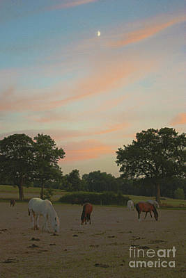 Photograph - Grazing Horses At Sunset by Terri Waters