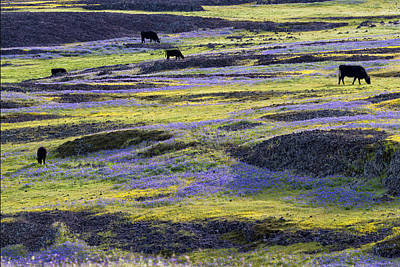 Photograph - Grazing In Paradise by Robert Woodward