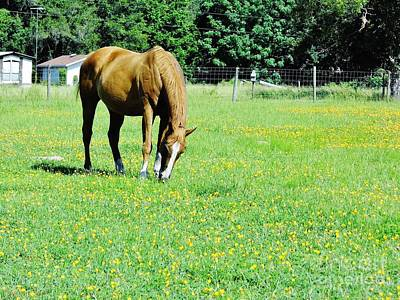 Pasture Photograph - Horse Grazing In The Flowers by D Hackett