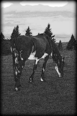 Photograph - Grazing  by Kathy Sampson
