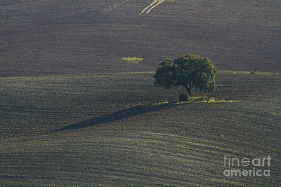 Grazing Land In Andalusia-1 Art Print by Heiko Koehrer-Wagner
