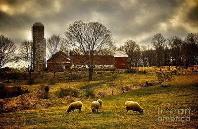Photograph - Grazing North South East And West by Mark Miller