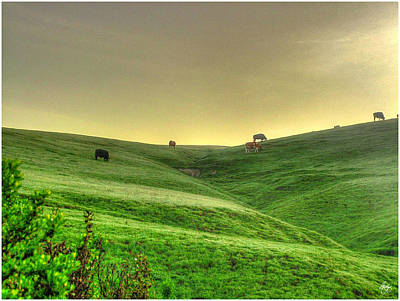 Photograph - Grazing On A Ridge In Morning Light by Wayne King