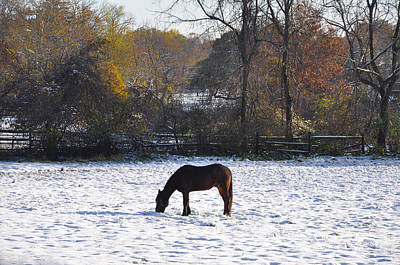 Grazing On A Snowy Day Art Print by Bill Cannon