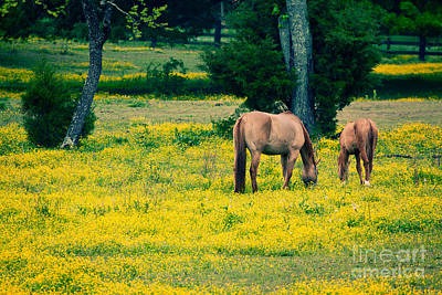 Grazing On Sunshine - Horses In A Pasture I Art Print by Dan Carmichael