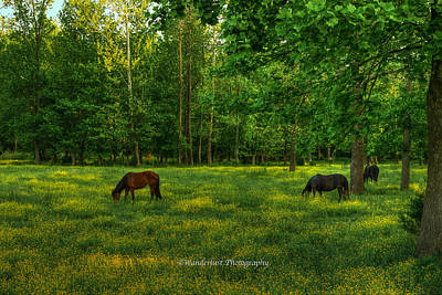Grazing Art Print by Paul Herrmann