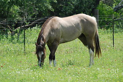 Paint Horse Photograph - Grazing Rights by GD Rankin