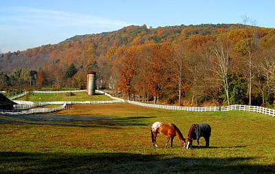 Autumn Photograph - Grazing Rights by Karl Ford
