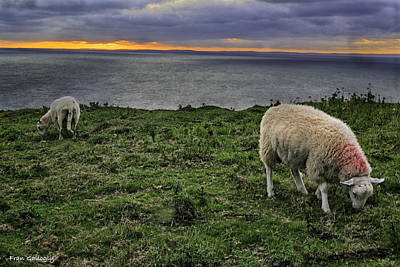 Photograph - Grazing Sheep by Fran Gallogly