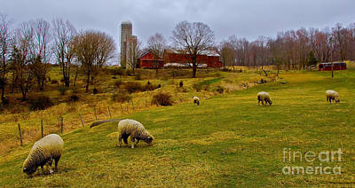 Photograph - Grazing Sheep by Mark Miller