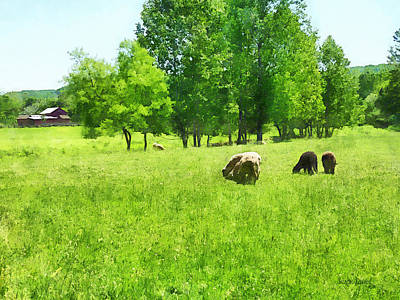 Photograph - Grazing Sheep by Susan Savad