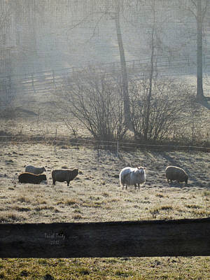 Photograph - Grazing The Frost by Trish Tritz