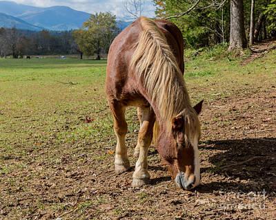 Photograph - Grazing Wild Horse by Gene Berkenbile