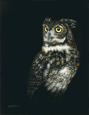 Great Horned Owl Drawing - Great Beauty by Heather Mitchell